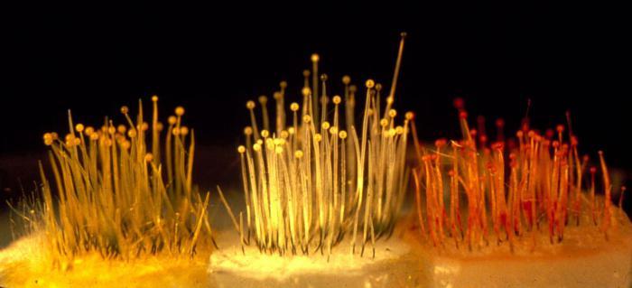 одноклеточные грибы примеры