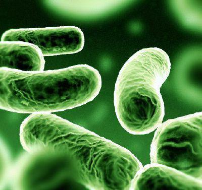 Симптомы туберкулеза на ранней 17