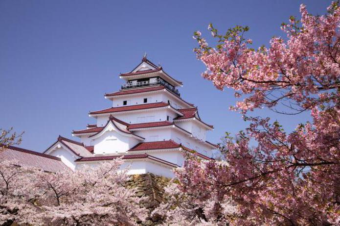 фото цветущей сакуры в японии