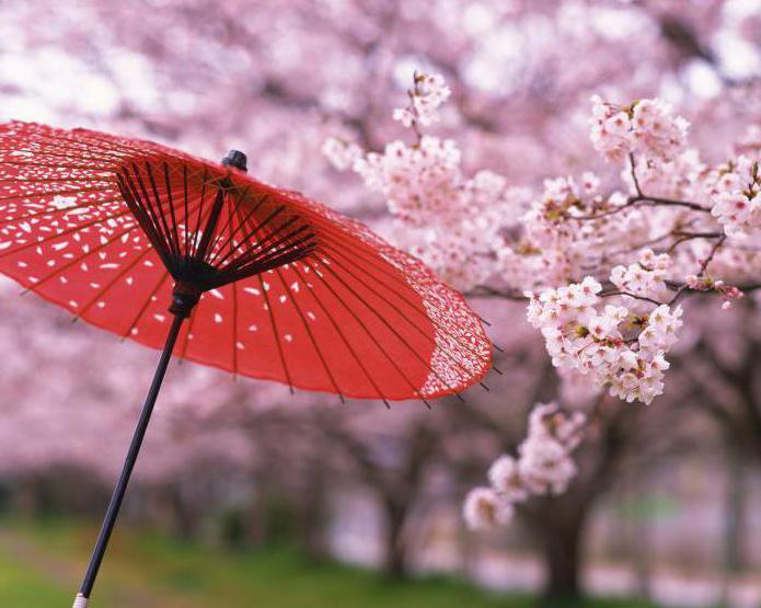 когда в японии цветет сакура