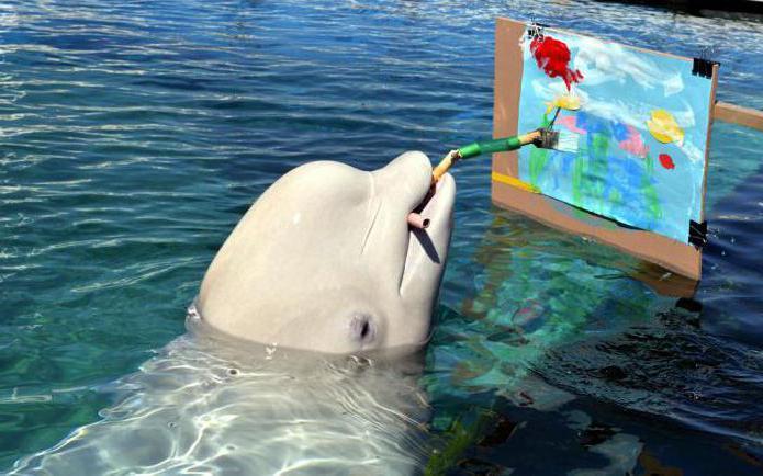 Как занятся сексом с дельфином