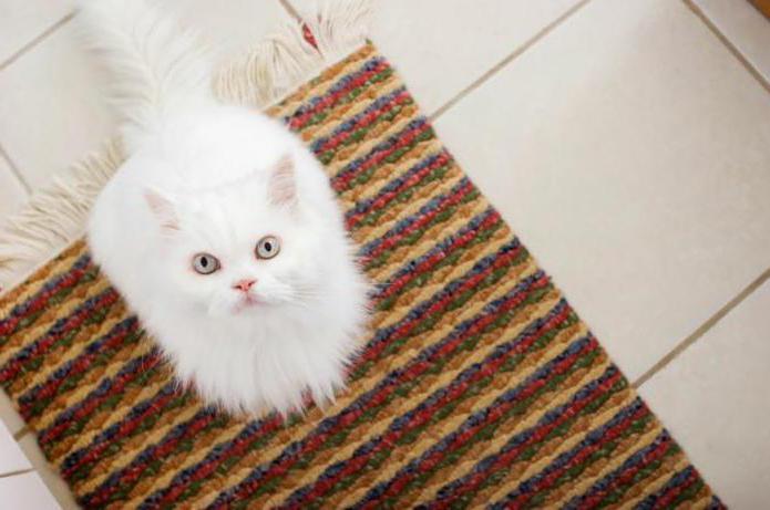 Чем и как избавиться от запаха от ковра? Как избавиться от кошачьего запаха на ковре?
