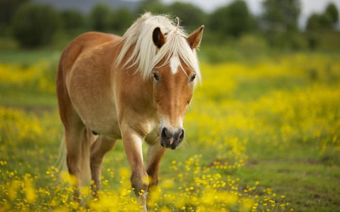 Верблюд по соннику
