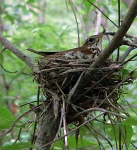 голоса лесных птиц слушать онлайн