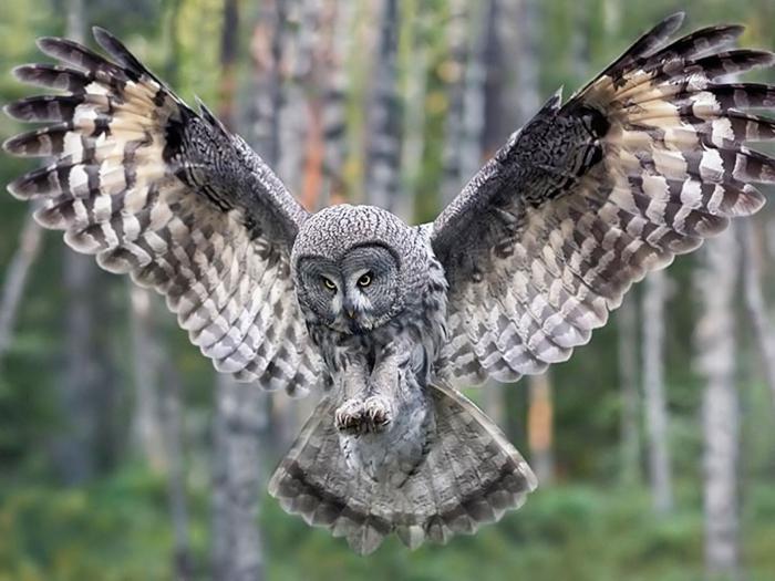 Названия лесных птиц