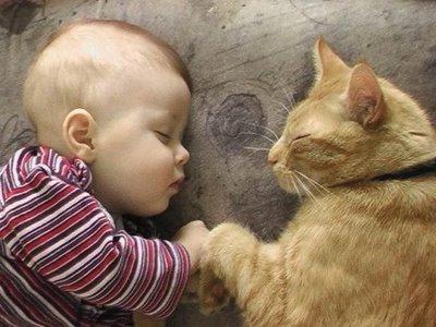 глисты у кошки лечение