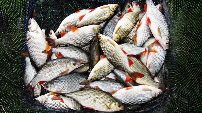 на что больше клюет рыба