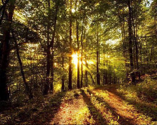 как ориентироваться в лесу по солнцу