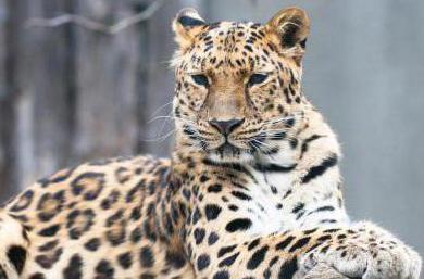 животные леса внесенные в Красную книгу России