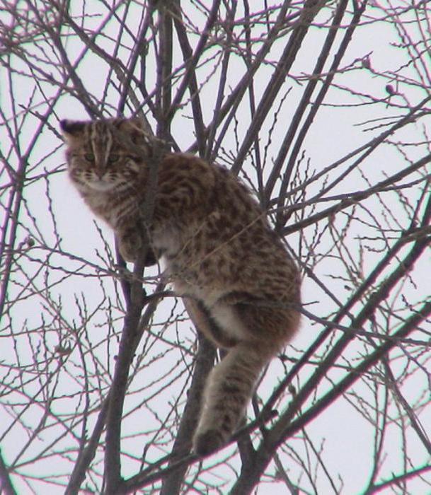 животные внесенные в Красную книгу России фото