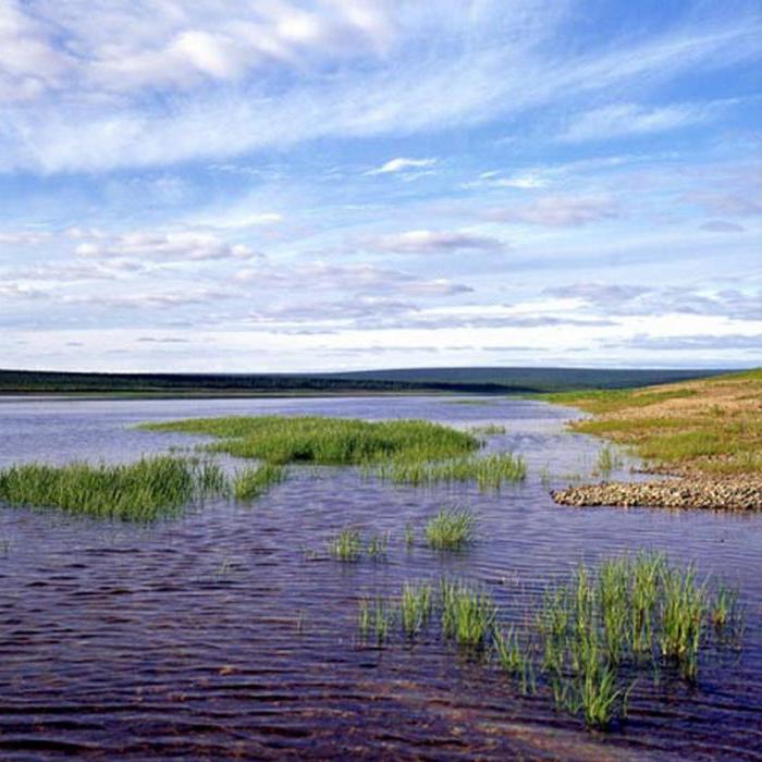 исток реки Оленек
