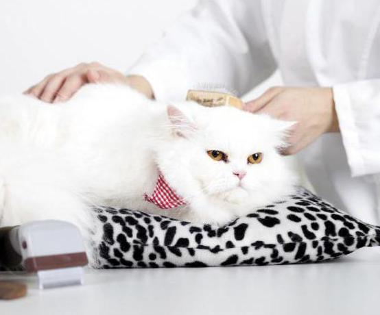 можно ли познакомить кошек