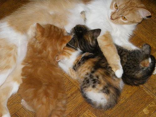 стерилизация кошки плюсы и минусы