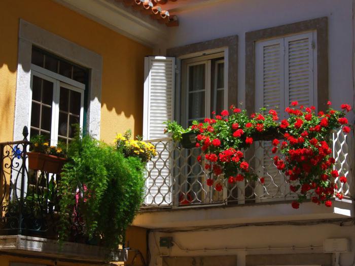 ампельные растения цветы