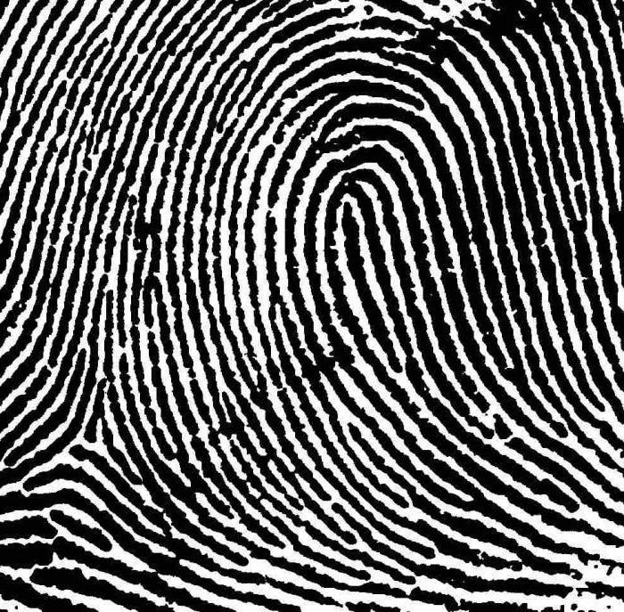 отпечаток руки