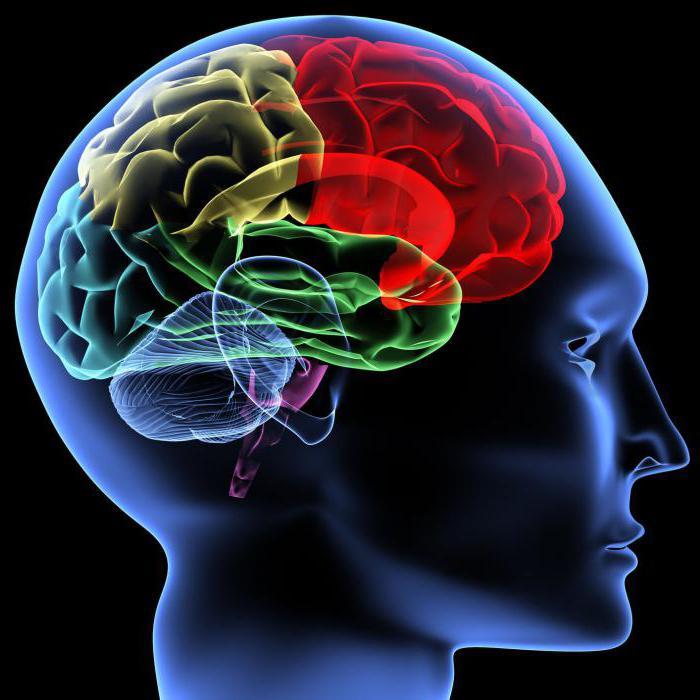 Диета для мозга: перечень продуктов
