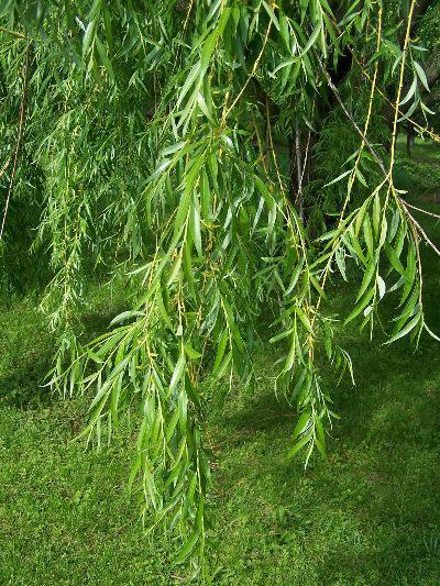 трава от аллергии особенности лечения аллергии травами