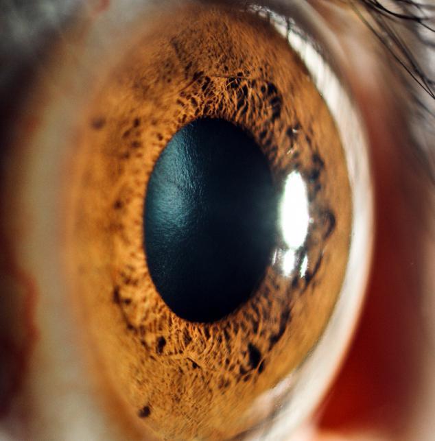 Очищение сосудов и хрусталика глаз