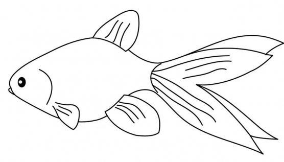 как нарисовать золотую рыбку карандашом