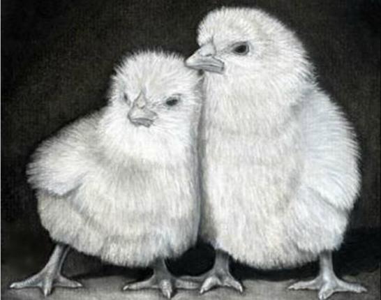 как нарисовать цыпленка карандашом