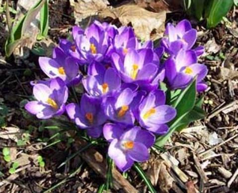 Названия фиолетовых цветов и названиями 30