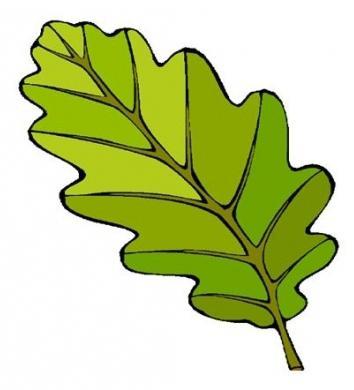 лист дуба рисунок