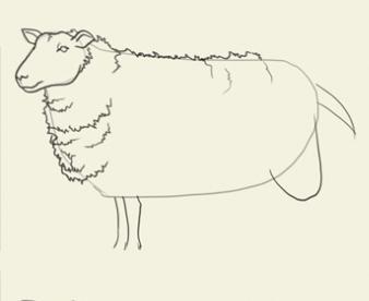как нарисовать овечку карандашом