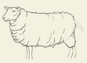 как нарисовать овечку карандашом [