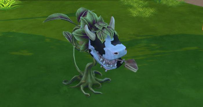 вырастить жвачное растение