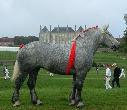 Лошадь породы першерон фото