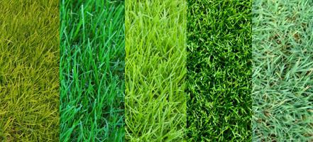 фото и названия травы