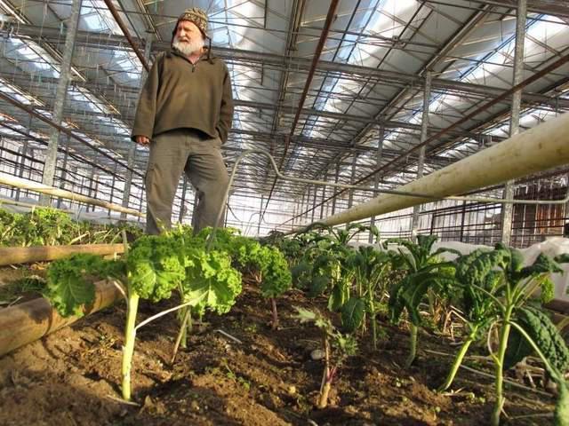 купить промышленную теплицу для зимнего выращивания