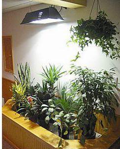 фитолампа для растений купить в москве в интернет