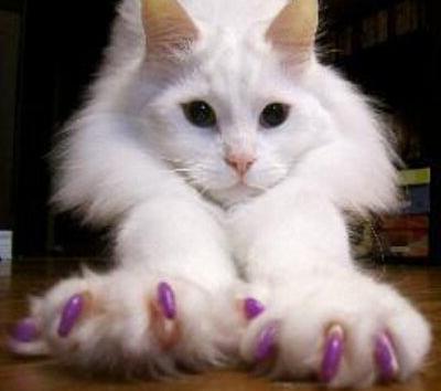 антицарапки для кошек инструкция - фото 7