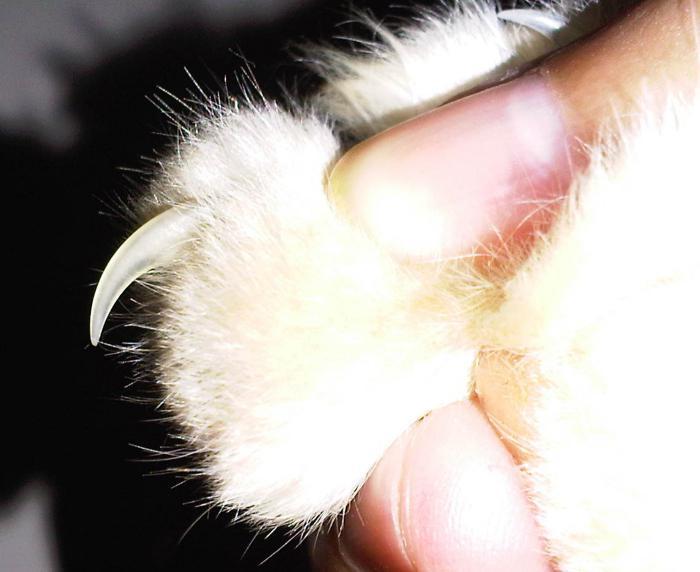 антицарапки для кошек инструкция - фото 8