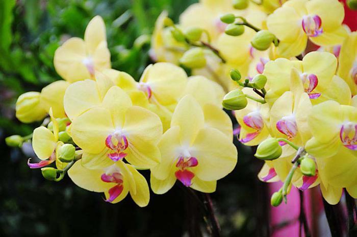Орхидея значение цветка по гороскопу
