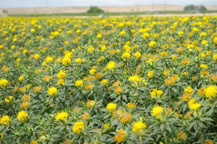 Лекарственные растение и их применение