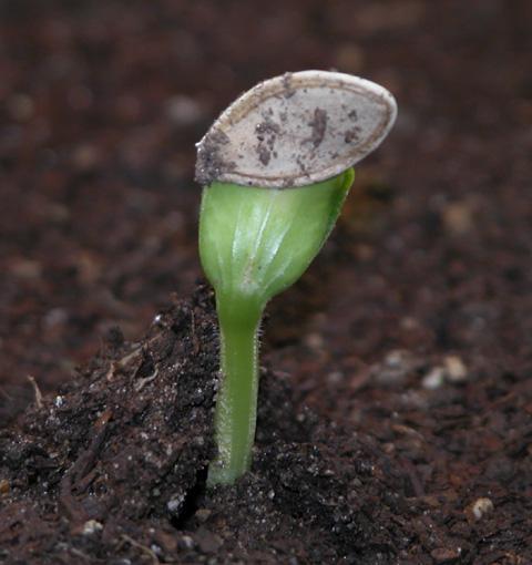 Какие сорта кабачков лучше посадить