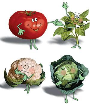 Совместимость овощей на грядке
