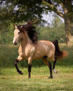 красивые кони
