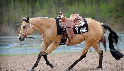 Гнедой конь это какой