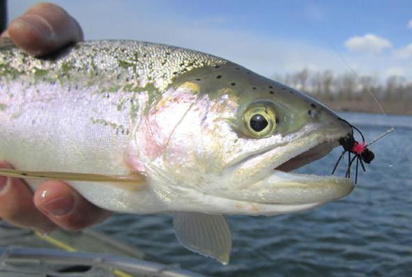 рыба тугунок польза