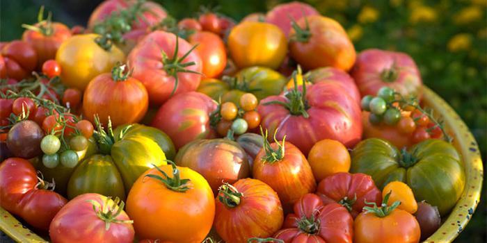 салат креветки помидоры сыр