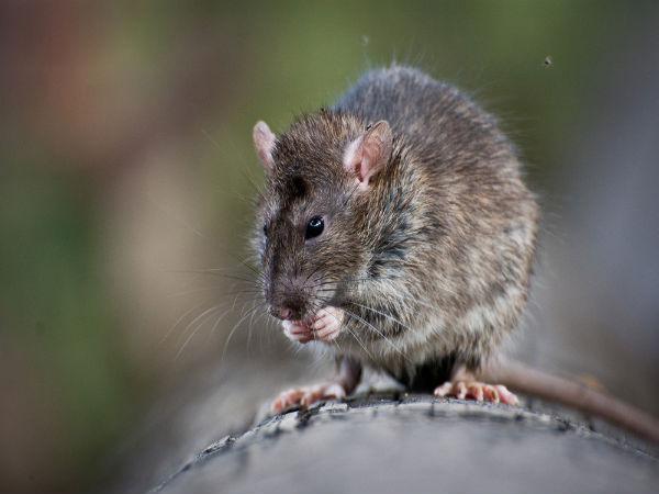 отзыв отпугиватели от животных грызунов крыс