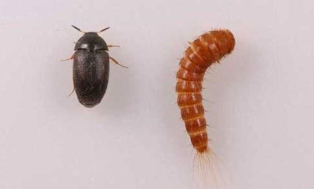 Какие насекомые могут быть в квартире