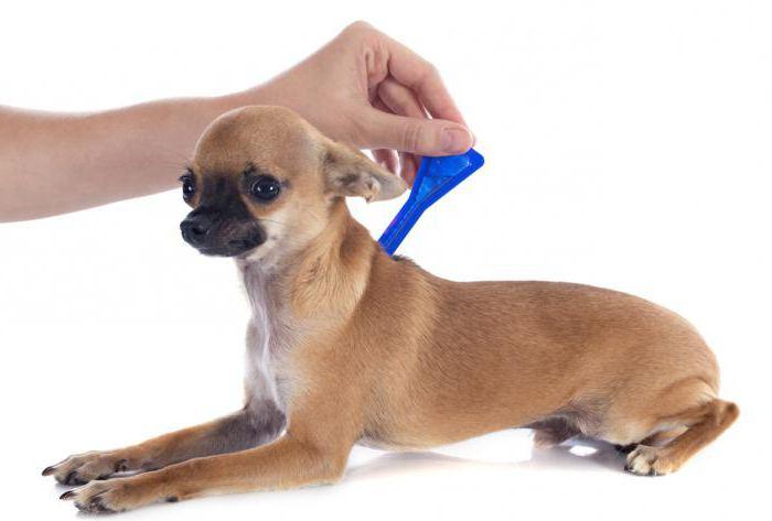 можно ли давать собаке лоратадин от аллергии