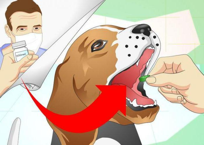 сколько давать супрастина собаке при аллергии