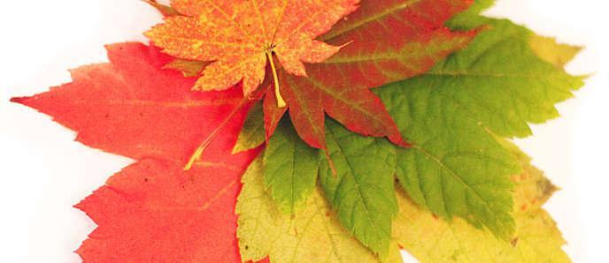 поговорки про осень для детей