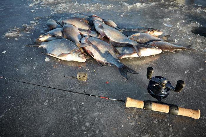 Зимняя рыбалка на фидер