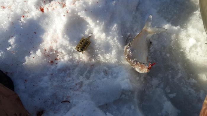 прикормка для зимней рыбалки на леща